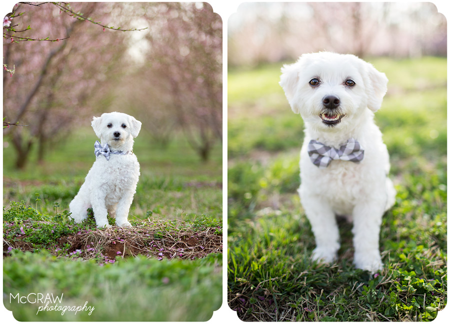 South Carolina Pet Photographer