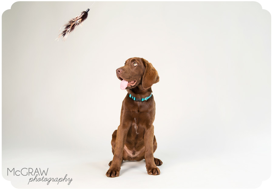Studio Pet Portraits Charlotte NC