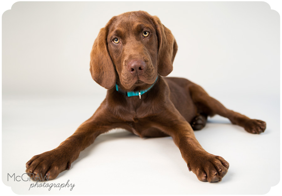 Cute Pet Studio Images in Charlotte NC