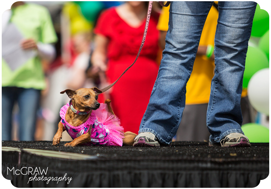 Doggy Fashion Show Pet Palooza