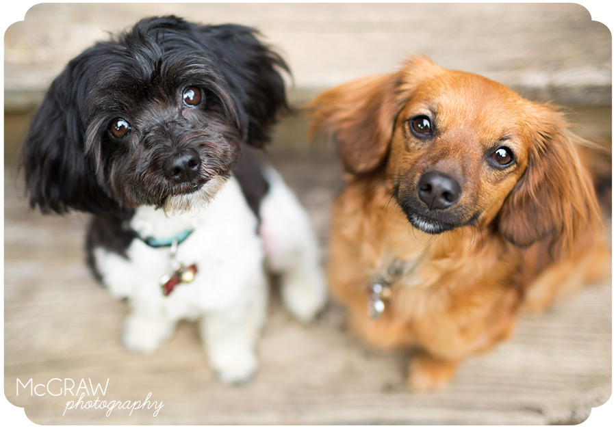 Cute Dog Portraits