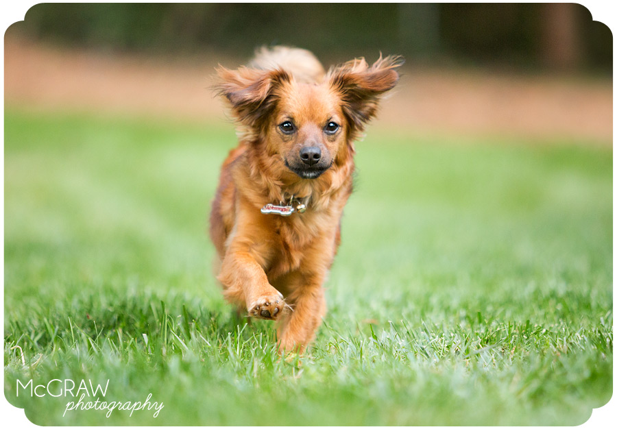 Contemporary Pet Photographer in Charlotte