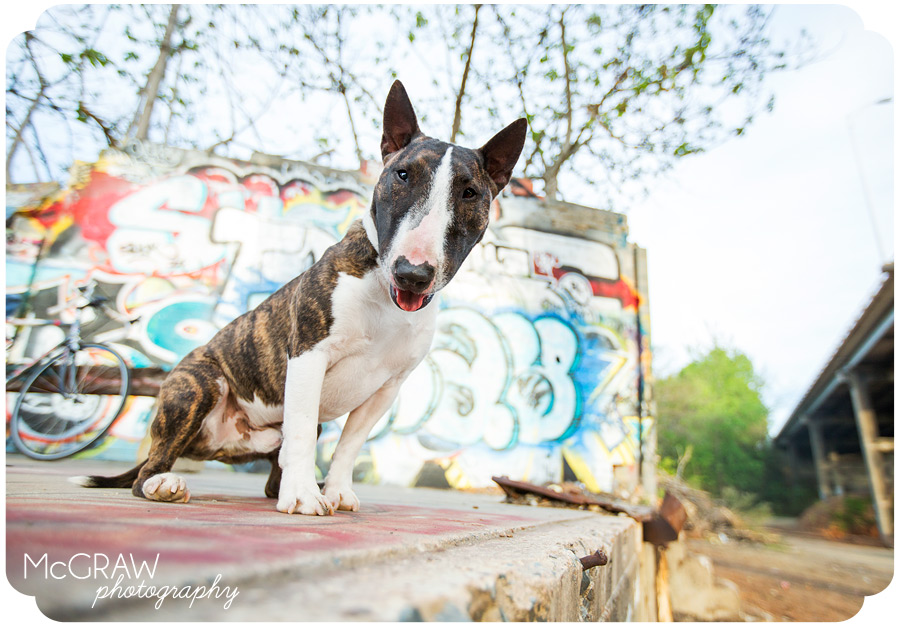On-Location Dog Portrait Session