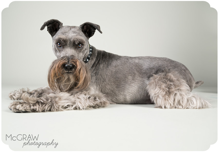 Dog Portraits in Studio