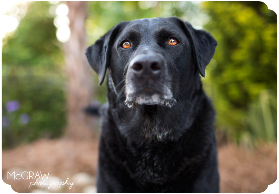 Kannapolis NC Dog Photography