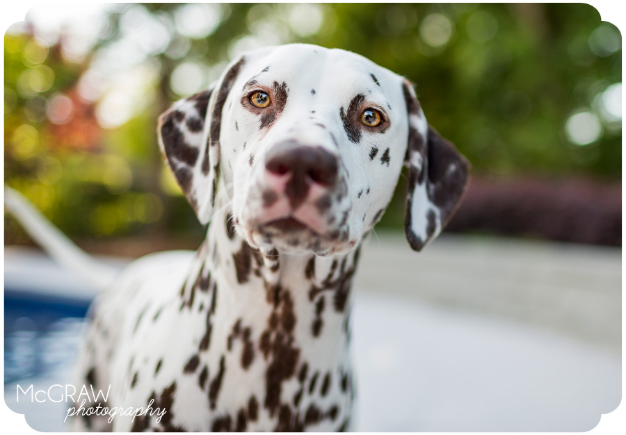Carolina's Premier Pet Photographer