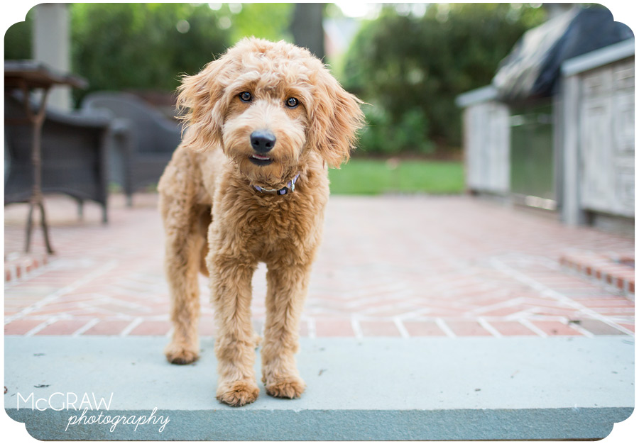 North Carolina Pet Portrait Photographer