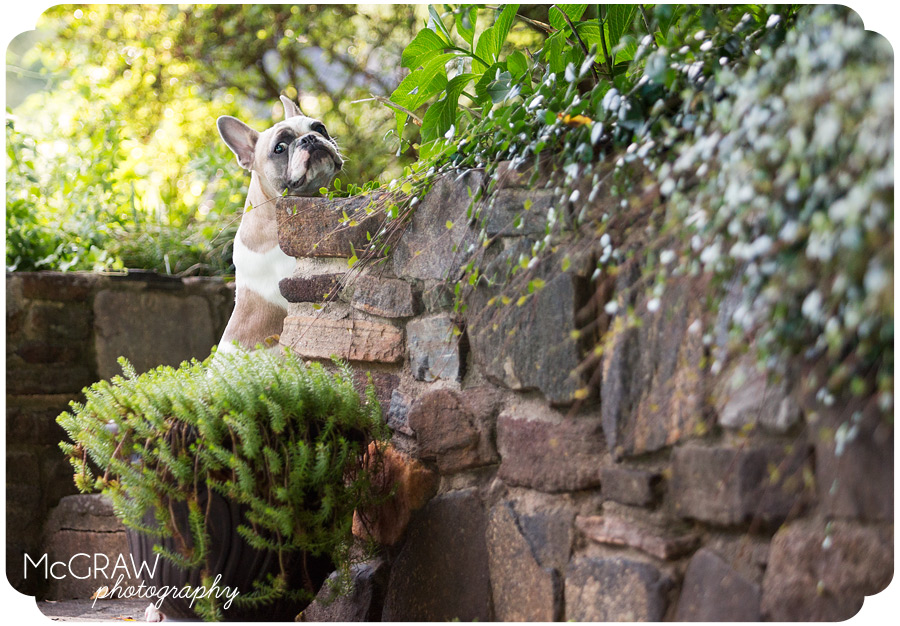 Outdoor Pet Portraits