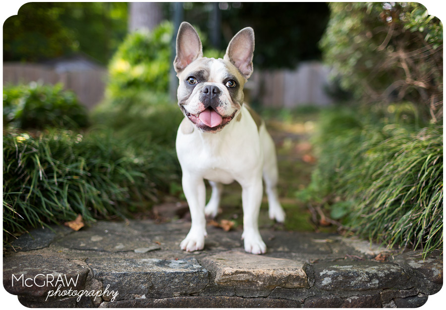 Charlotte area pet photographer