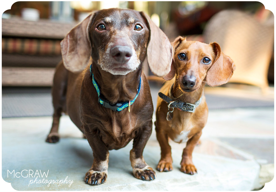 Mooresville NC Dog Photographer
