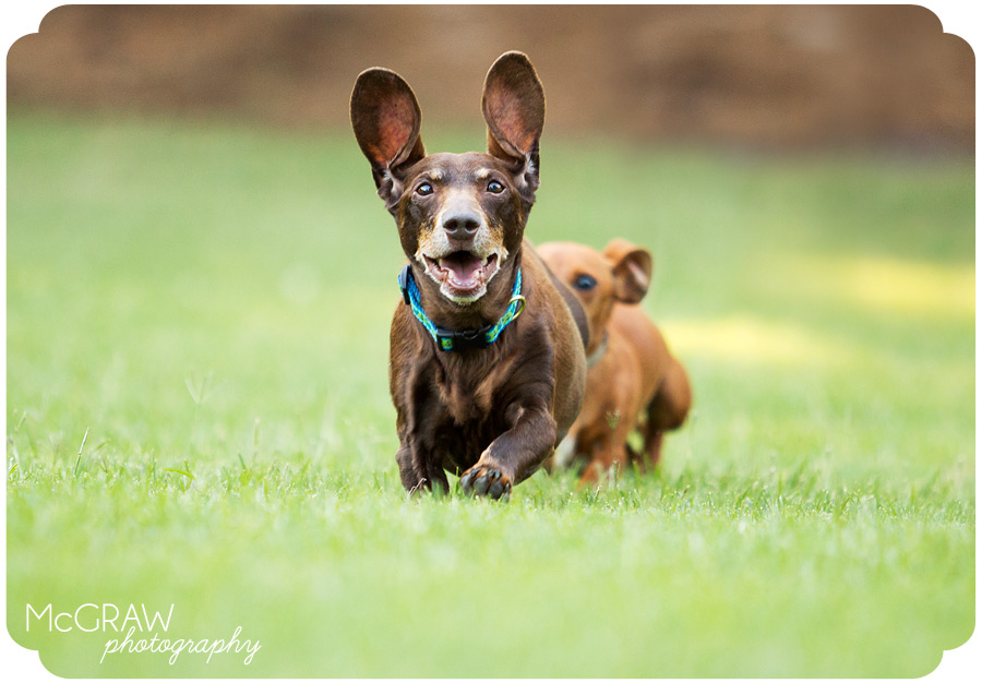 Fun On-Location Dog Portraits