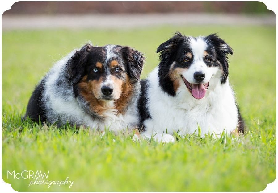 North Carolina Pet Portraits