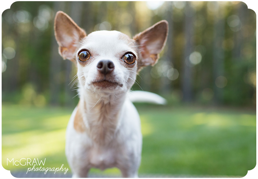 Cute Pet Portraits