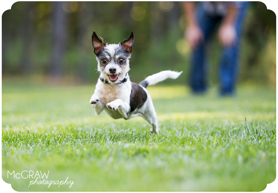 Dog Photographer in North Carolina