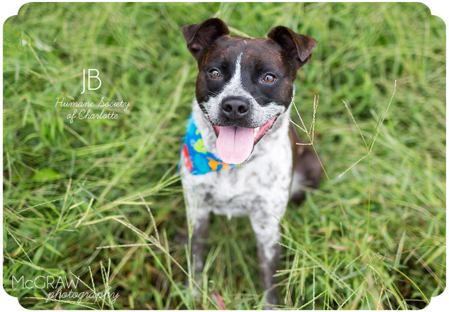 Adoptable Dog Photographer