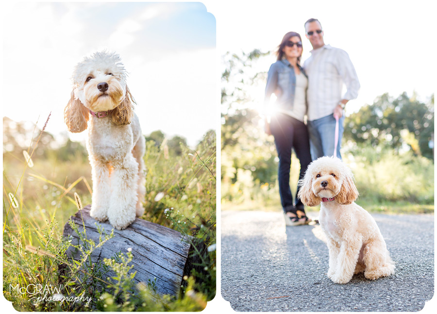 Charlotte, NC Pet Photographer
