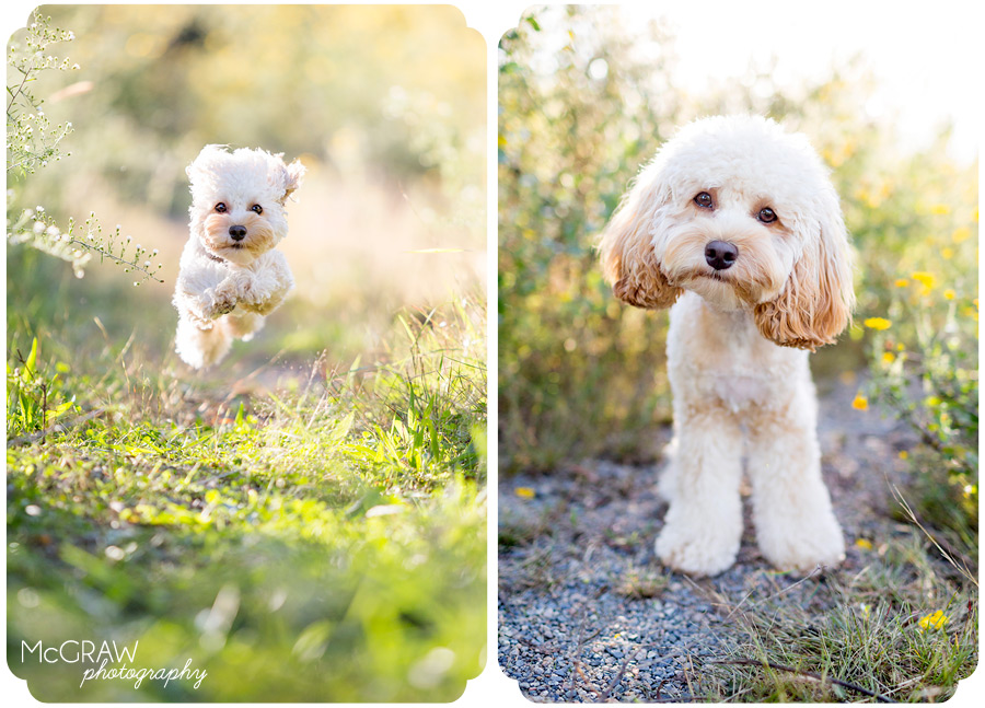 Charlotte, NC Dog Photographer
