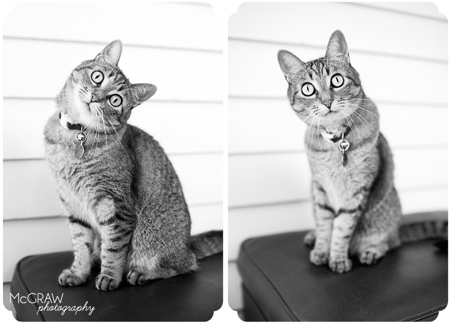 Feline Pet Photography
