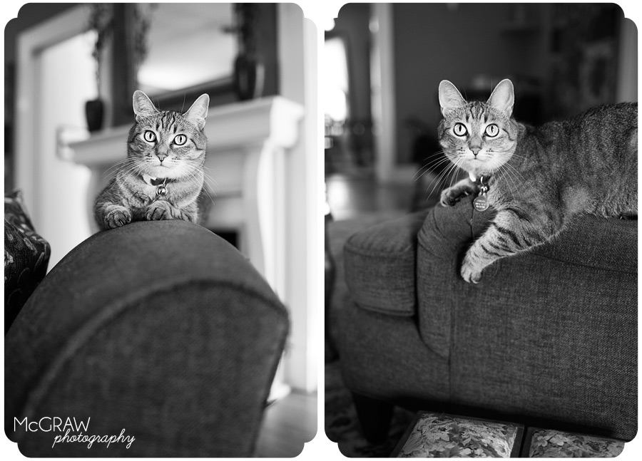 Kitty Portraits