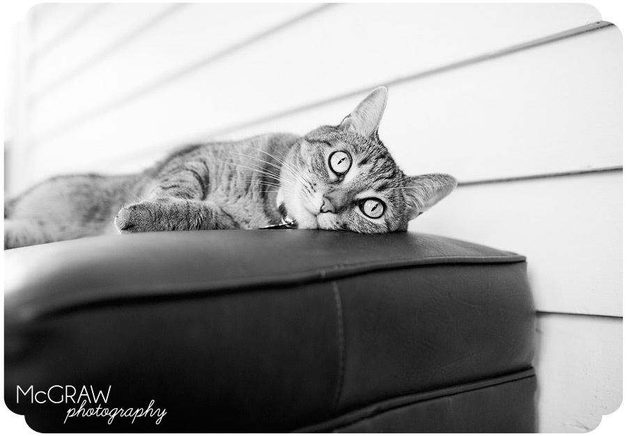 Charlotte NC Cat Photographer