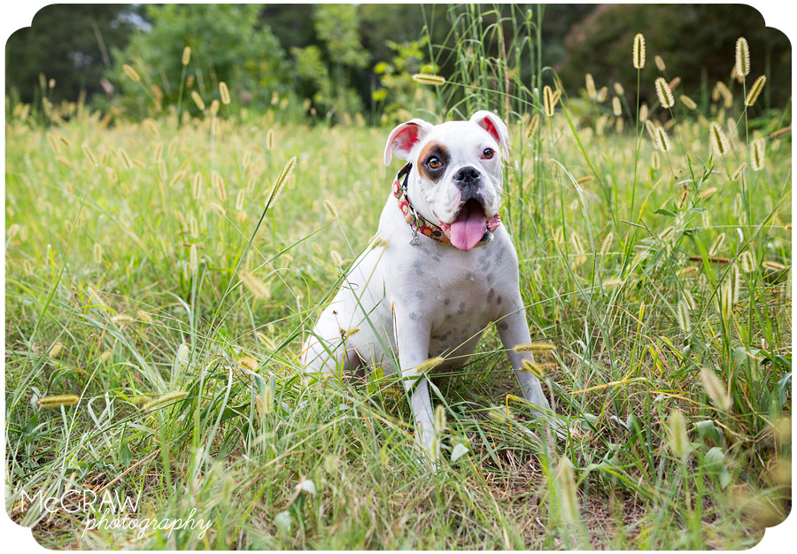 Charlotte North Carolina Pet Photography