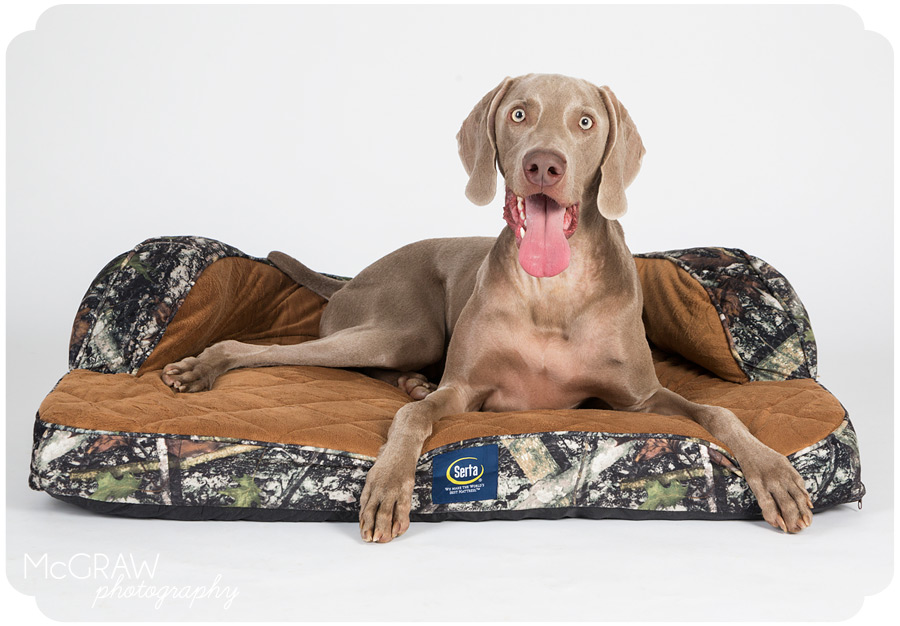 Commercial Dog Photographer