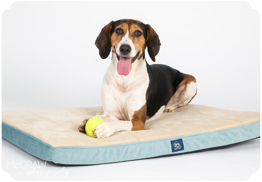 Serta Pet Beds Photo Shoot