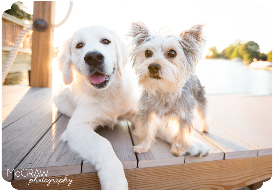 Lake Norman Pet Portraits