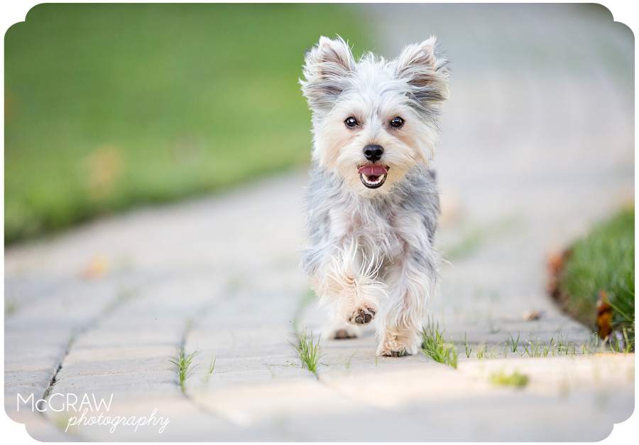 Playful and fun Pet photography