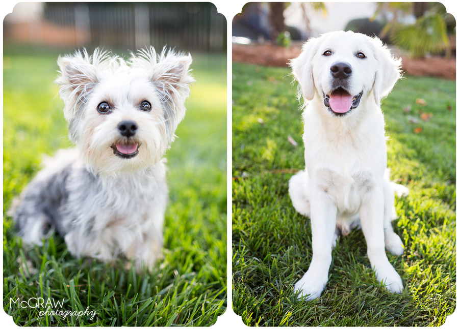 Charlotte NC Pet Photographer