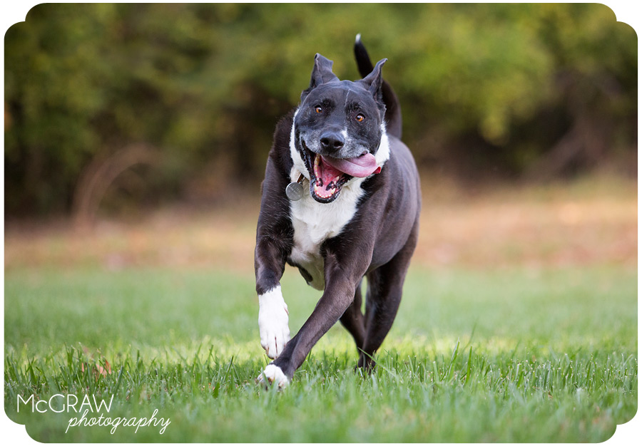 North Carolina Pet Photographer