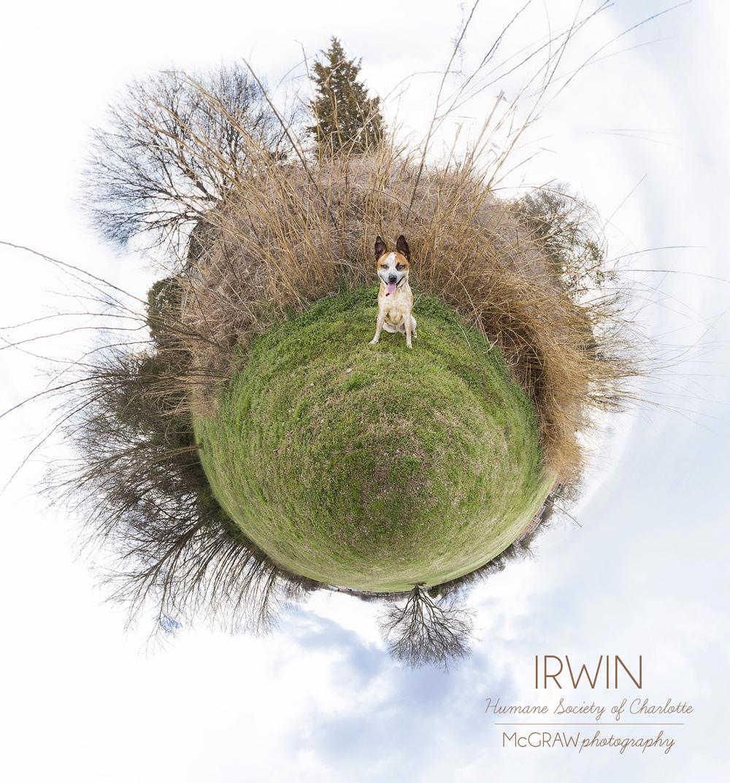 IrwinWeeWorld.jpg