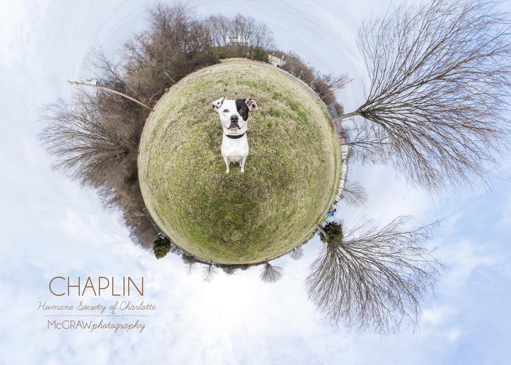 ChaplinWeeWorld.jpg