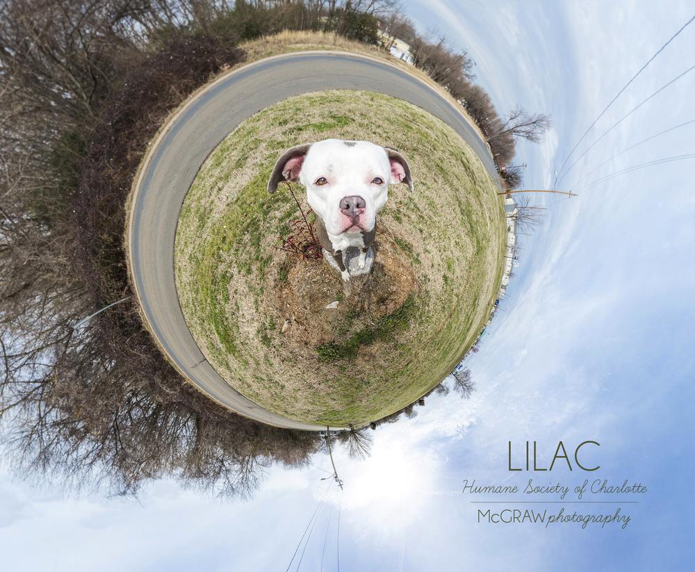 LilacWeeWorld.jpg