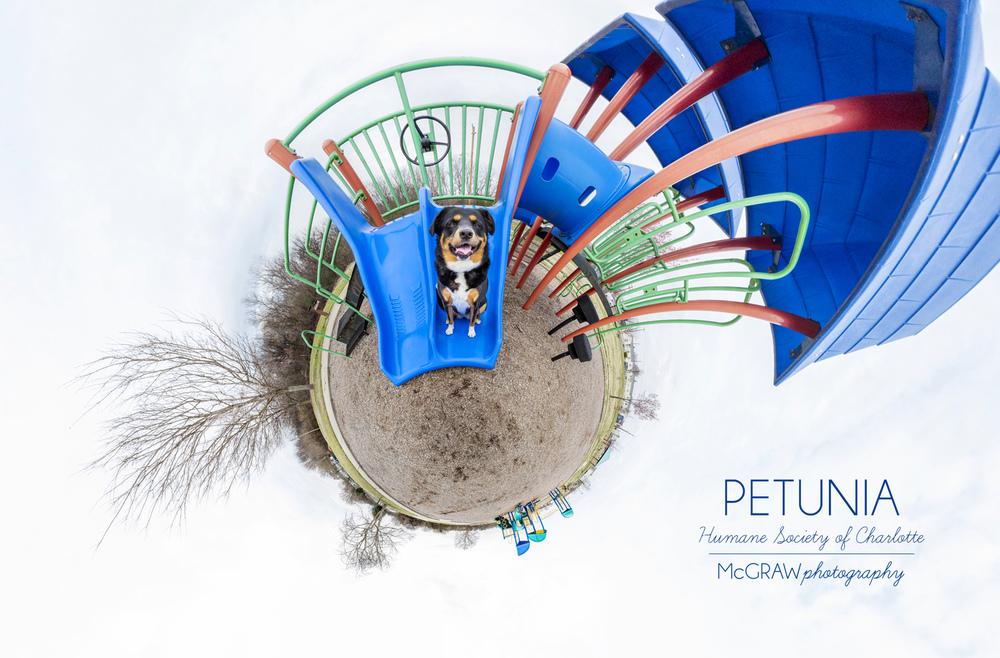 PetuniaWeeWorld.jpg