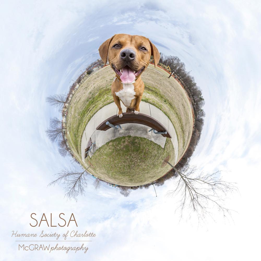 SalsaWeeWorld.jpg