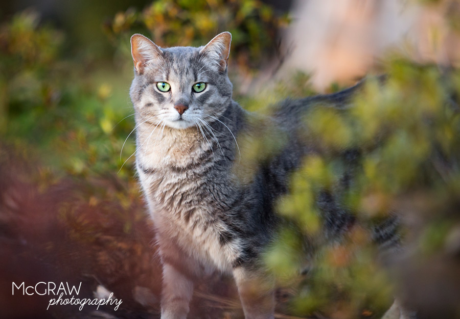 Mooresville NC Cat Photographer