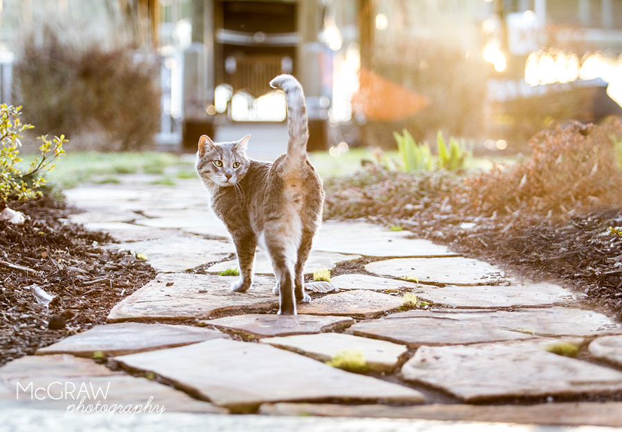 North Carolina Cat Photographer