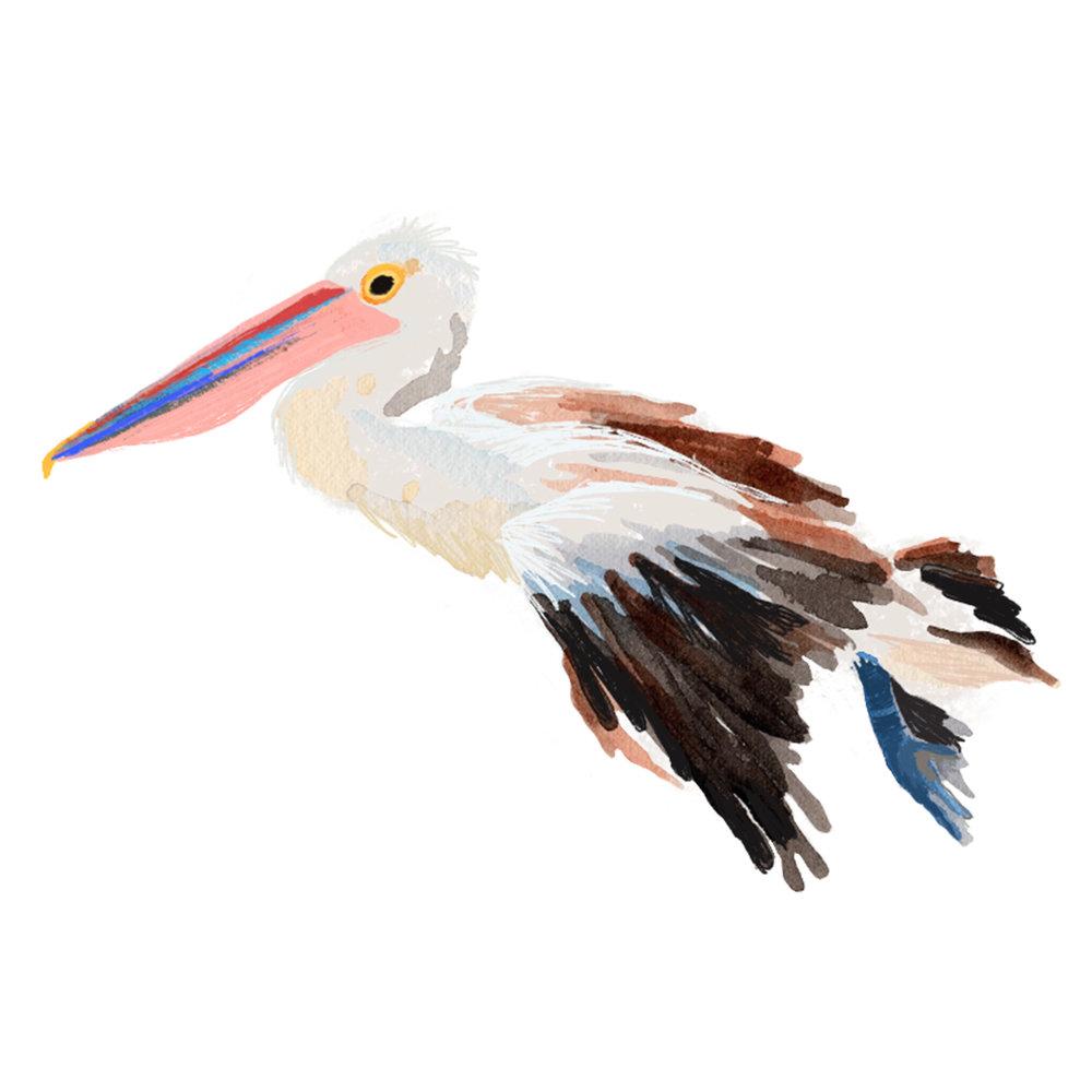 Flying-Stork.jpg