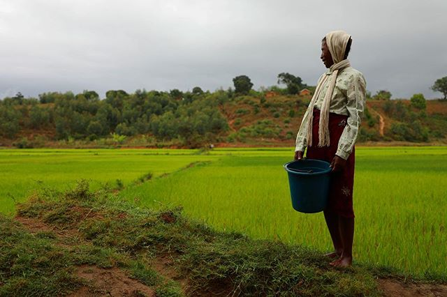 The village of Ambodiranonambilona (Am-boo-dean-am-beel) sits high on a hill and is surrounded by rice fields. It is here that Justine - Mother, Visionary, Optimist - goes daily to collect water for her family of ten. Our #earthmonthca 2019 campaign aims to change this daily journey. Register or donate today. 📷 @andrivola  @avedacanada @wateraidcanada #cleanwater #madagascar #avedaearthmonth #collegaearthmonth