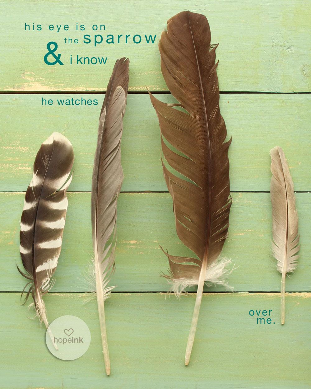 Feathers_Sparrow_Teal_hopeink.jpg