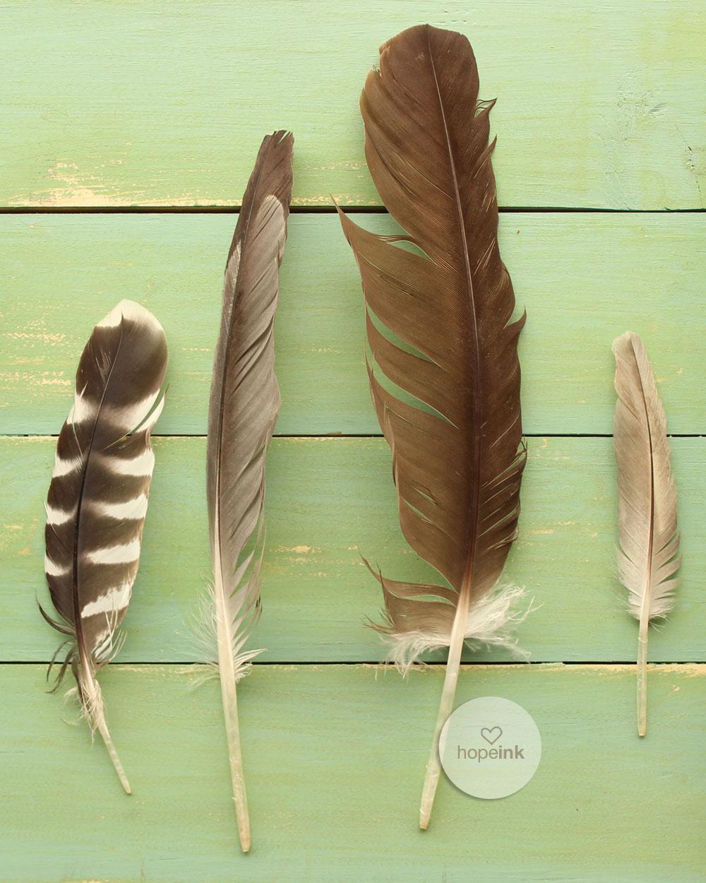 Feathers_wordless_hopeink.jpg