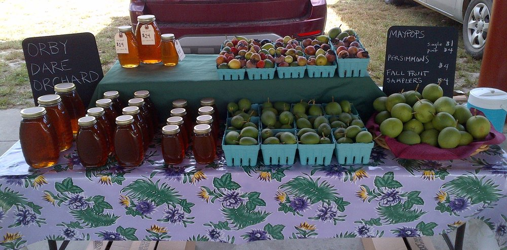 Orby Dare orchard website picture.jpg