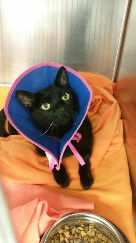 Princess Dot after surgery