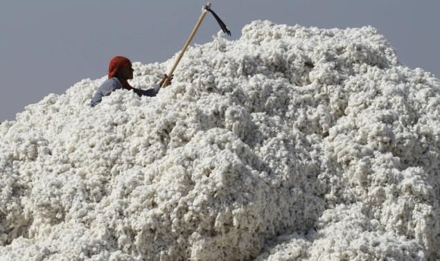 Cotton workers are constantly exposed to the chemicals required for cotton