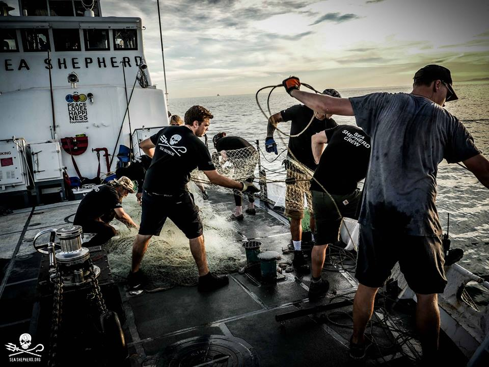 sea shepherd crew removing discarded fishing nets from the ocean