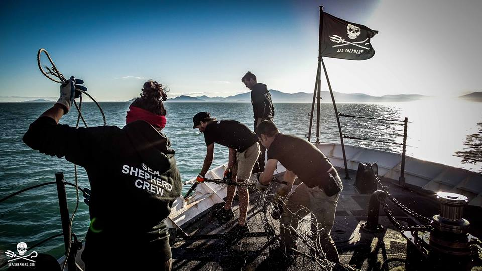 Sea Shepherd Nets3.jpg