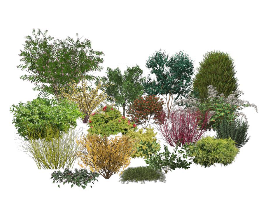 trees-and-shrubs.jpg