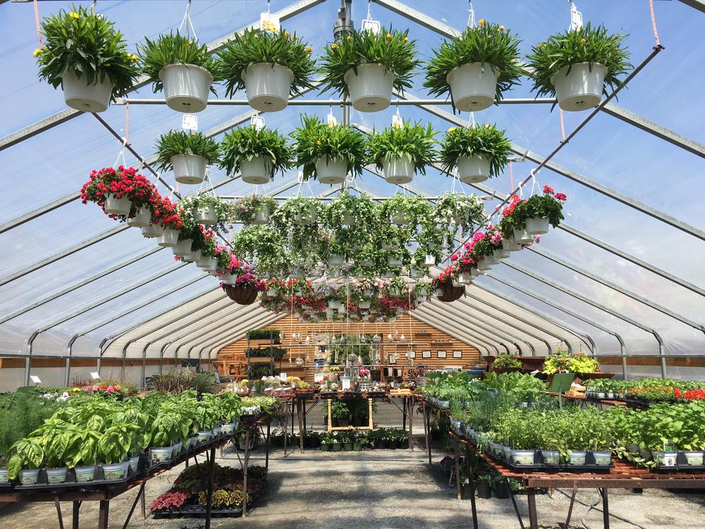 greenhouse 2.jpg