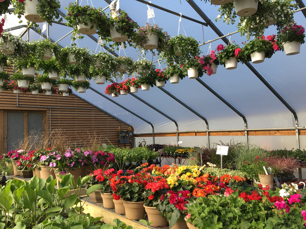greenhouse 5.jpg